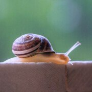 snail slime inspires super strong adhesive